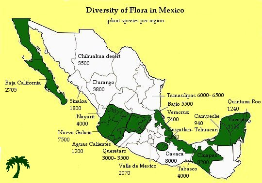 Floristic Diversity in Mexico